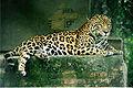 120px-Panthera_onca