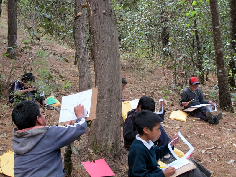 Youth-drawing-trees-in-sacred-forest-Isabel-Carrio-48-Cantones